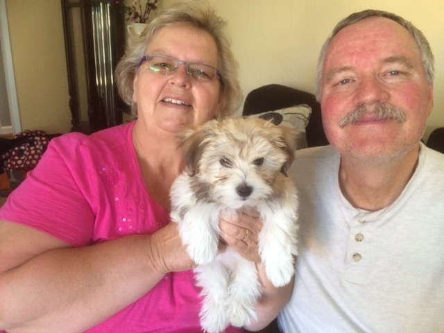 Havanese Dog Pics & Havanese Puppies Photos with Owners